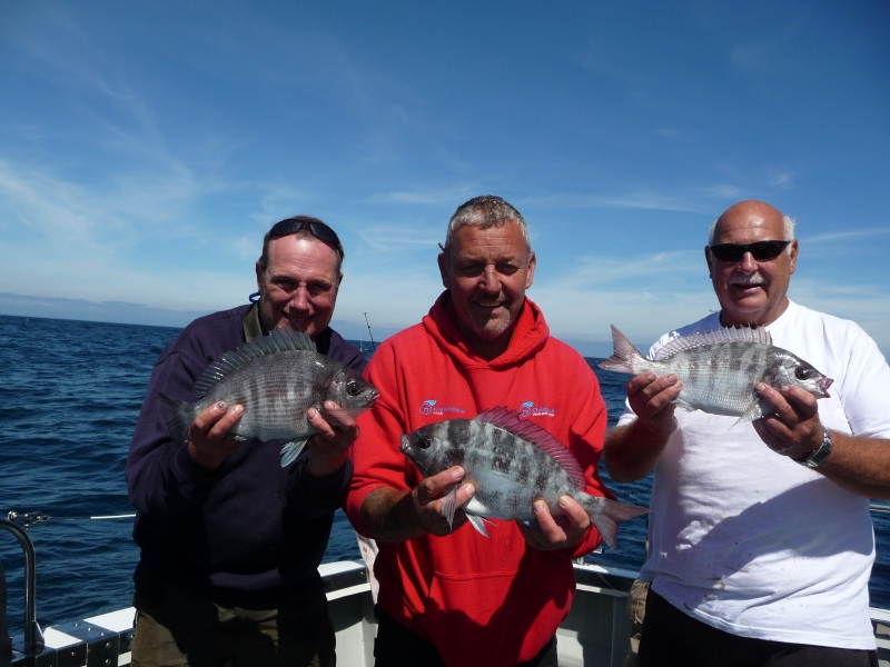 Boat angling trip from Poole catches Bream