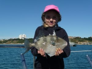 Trigger fish caught by Flora on a local sea fishing trip Poole